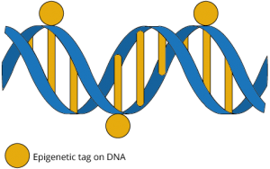 maize and blue epigenetics